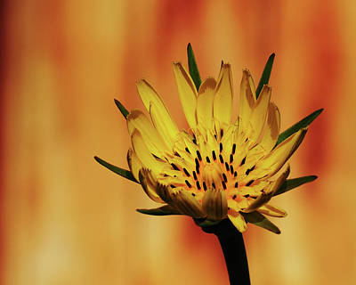 Photograph - Wildbloom by Tom Druin