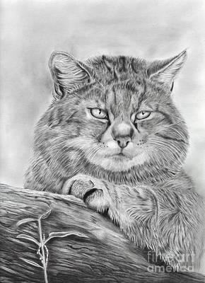 Wildcat Watch Art Print by Linda Reichert