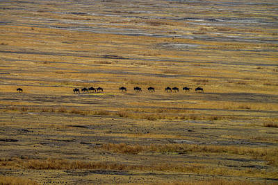 Photograph - Wildebeest At Ngorongoro by Marilyn Burton