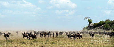 Photograph - Wildebeest In Serengueti During The Great Migration - Panorama by RicardMN Photography