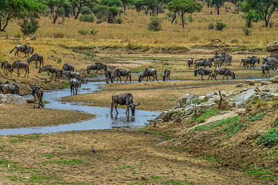 Photograph - Wildebeest In The Tarangire by Marilyn Burton