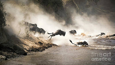 Photograph - Wildebeest Leap Of Faith Into The Mara River by Jane Rix