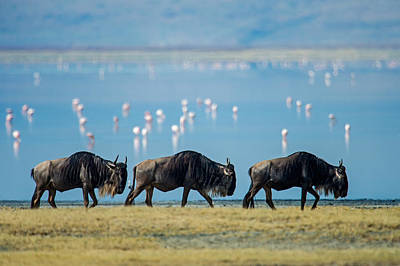 Of Birds Photograph - Wildebeests, Ngorongoro Crater by Panoramic Images