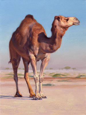 Camels Painting - Wilderness Camel by Ben Hubbard