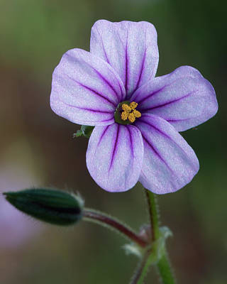 Photograph - Wilderness Flower 3 by Paul Johnson