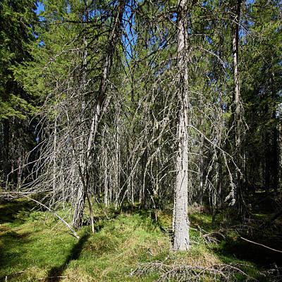 Photograph - Wilderness by Jouko Lehto