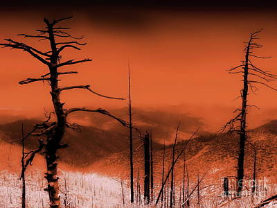 Photograph - Wilderness Of Desolation by Tim Richards
