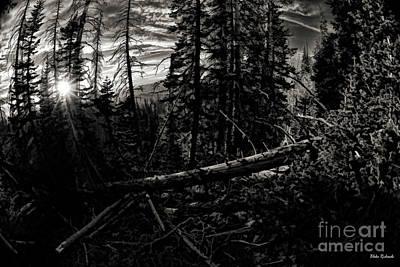 Photograph - Wilderness Sunset  by Blake Richards