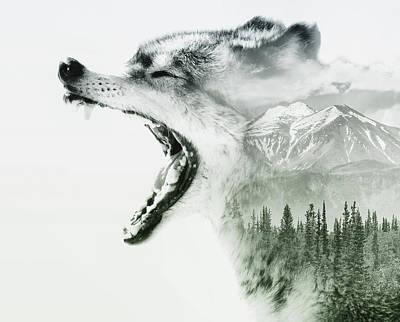 Wolf Art Photograph - Wilderness Wolf by Stephanie McDowell