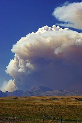 Photograph - Wildfire by Tracey Vivar