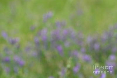 Photograph - Wildflower Abstract by Maria Urso