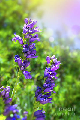 Photograph - Wildflower Afternoon by Susan Warren