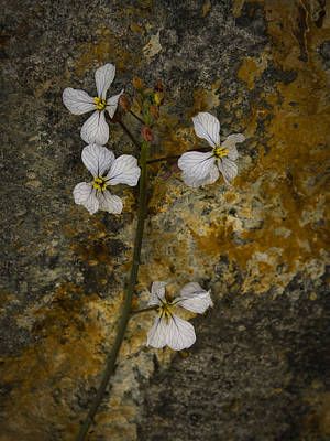 Photograph - Wildflower Against Rock by Jean Noren