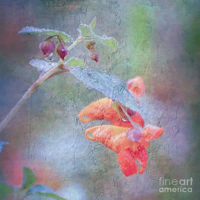 Photograph - Wildflower Art - Jewelweed by Kerri Farley