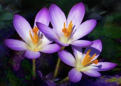 Digital Art - Wildflower Art - Rain Lily by Ron Grafe