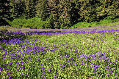 Photograph - Wildflower Bloom In Boise Hills by Vishwanath Bhat