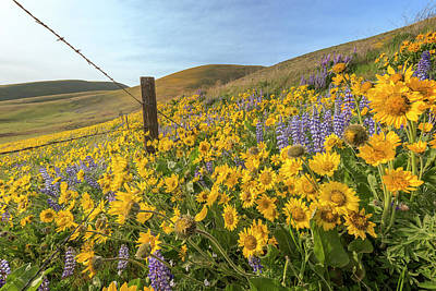 Photograph - Wildflower Bonanza by Jon Ares