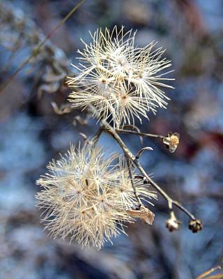 Photograph - Wildflower by Carol Bradley