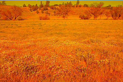 Photograph - Wildflower Carpet by Ram Vasudev