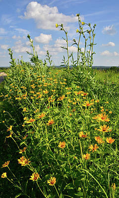 Photograph - Wildflower Cluster At Marengo Ridge by Ray Mathis