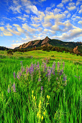 Fort Collins Photograph - Wildflower Colors by Scott Mahon
