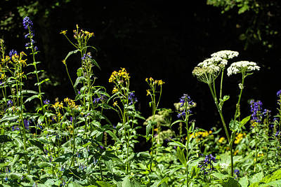 Photograph - Wildflower Competition by Marilyn Hunt