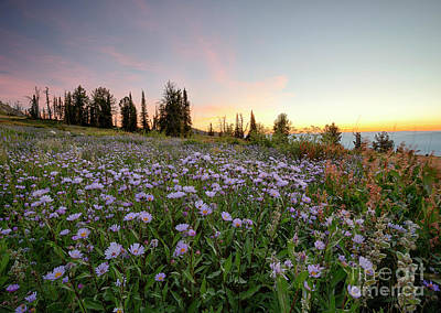 Photograph - Wildflower Dawn by Idaho Scenic Images Linda Lantzy