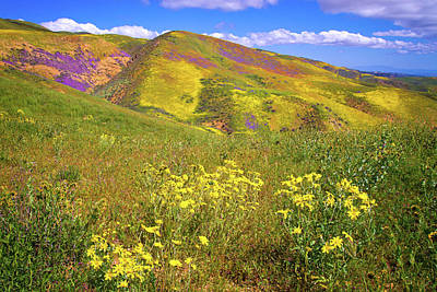 Photograph - Wildflower Days Of The Superbloom by Lynn Bauer