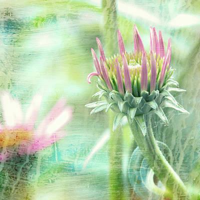 Photograph - Wildflower Dreamscape by Bob Orsillo