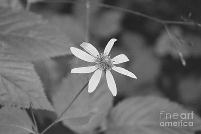 Art Print featuring the photograph Wildflower by Eric Liller