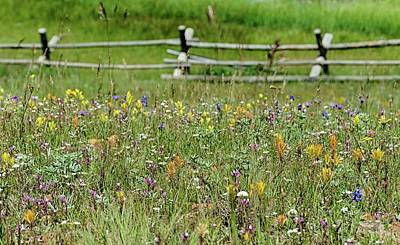 Wildflower Fence Art Print