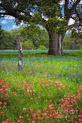 Llano Photograph - Texas Pastoral Landscape by Inge Johnsson