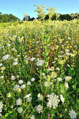 Photograph - Wildflower Field At Marengo Ridge by Ray Mathis
