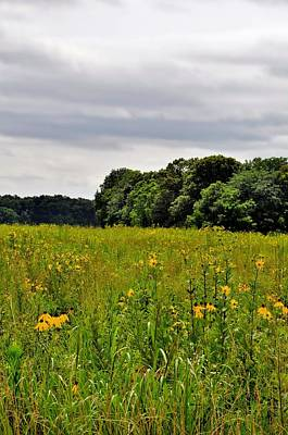 Photograph - Wildflower Field by Michelle McPhillips