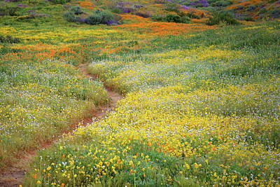 Art Print featuring the photograph Wildflower Field Near Diamond Lake In California by Jetson Nguyen