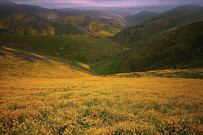 Photograph - Wildflower Field Up In The Temblor Range At Carrizo Plain National Monument by Jetson Nguyen
