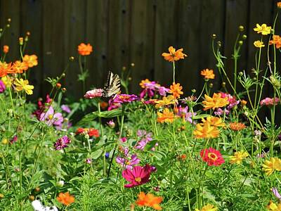 Photograph - Wildflower Fun by Patricia McKay