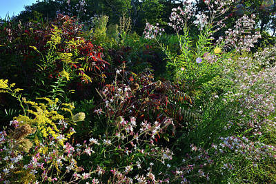 Photograph - Wildflower Garden In Marengo Ridge by Ray Mathis