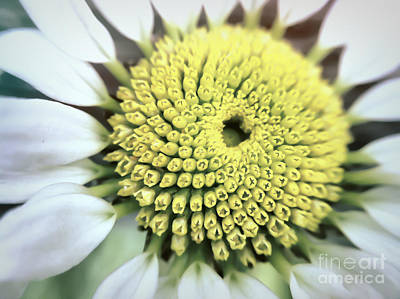 Photograph - Wildflower Heart by Kerri Farley