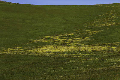 Wildflower Hillside Print by Garry Gay