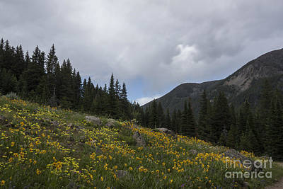 Mountain Photograph - Wildflower Hillsides by Carolyn Brown
