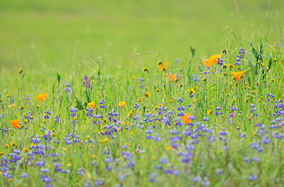 Fiddleneck Photograph - Wildflower Impressions by Kathy Yates