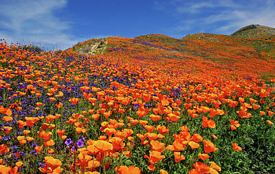 Photograph - Wildflower Jackpot by Lynn Bauer