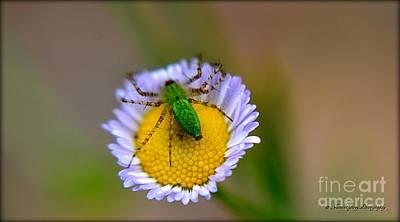 Photograph - Wildflower by Janice Spivey