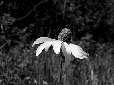 Photograph - Wildflower by Jeannie Bushman