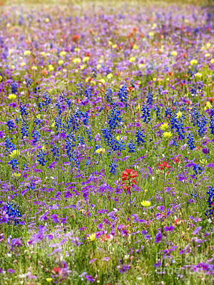 Photograph - Wildflower Meadow by Ella Kaye Dickey
