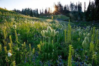 Photograph - Wildflower Meadow by Lynn Hopwood