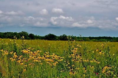 Photograph - Wildflower Meadow by Michelle McPhillips