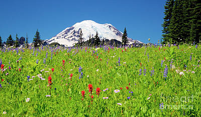 Photograph - Wildflower Meadow Near Mt. Rainier by Bruce Block