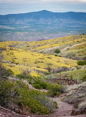 Photograph - Wildflower Meadows by Karen Stephenson